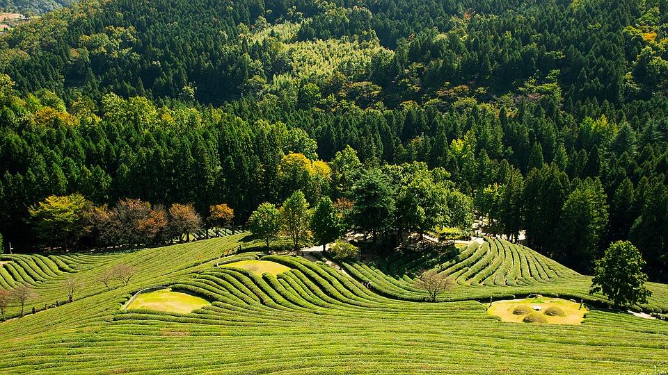 greenery-2884552_960_720.jpg