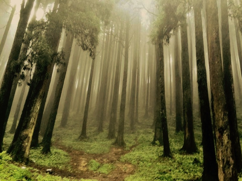 Misty_forest_veiw_of_lepchajagat