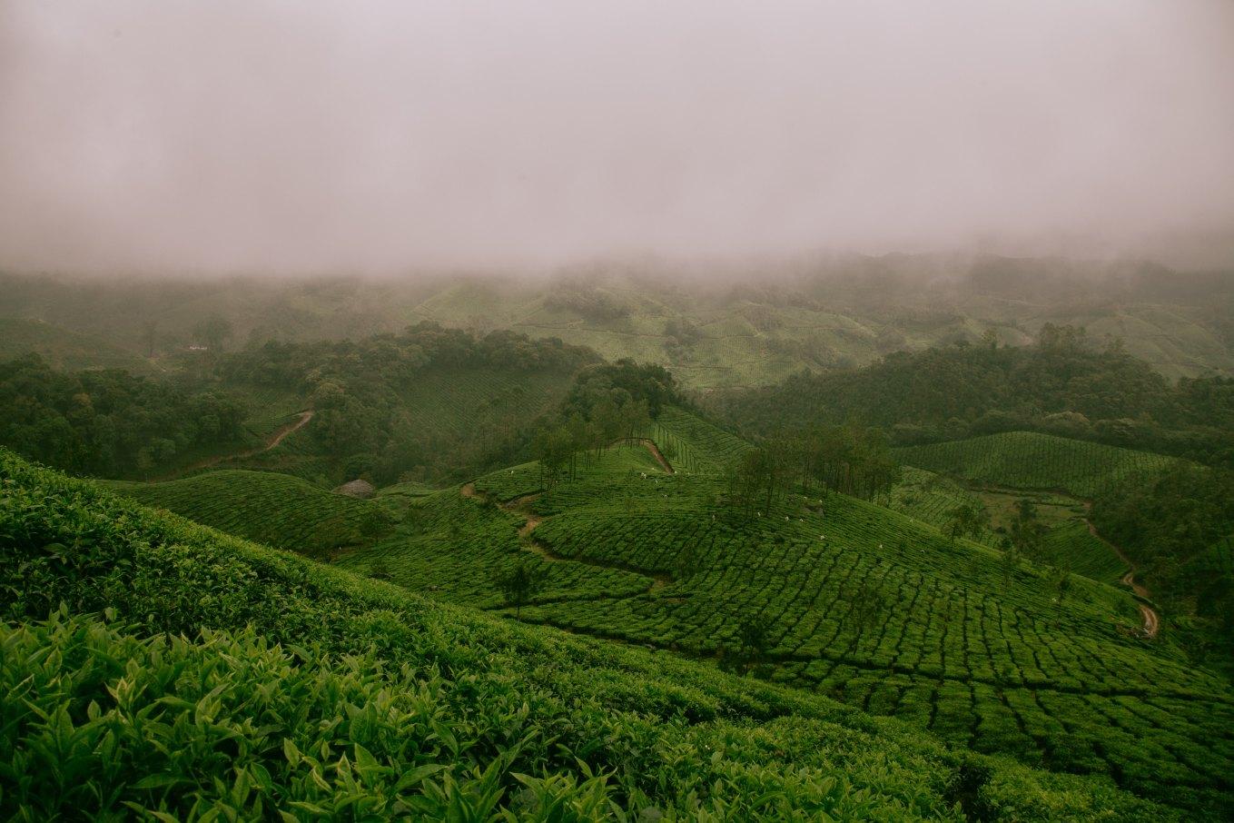 Image of the hillstation Munnar in Kerala